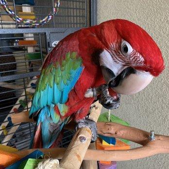 Omar's Exotic Birds - 70 Photos & 107 Reviews - Pet Sitting - 23507