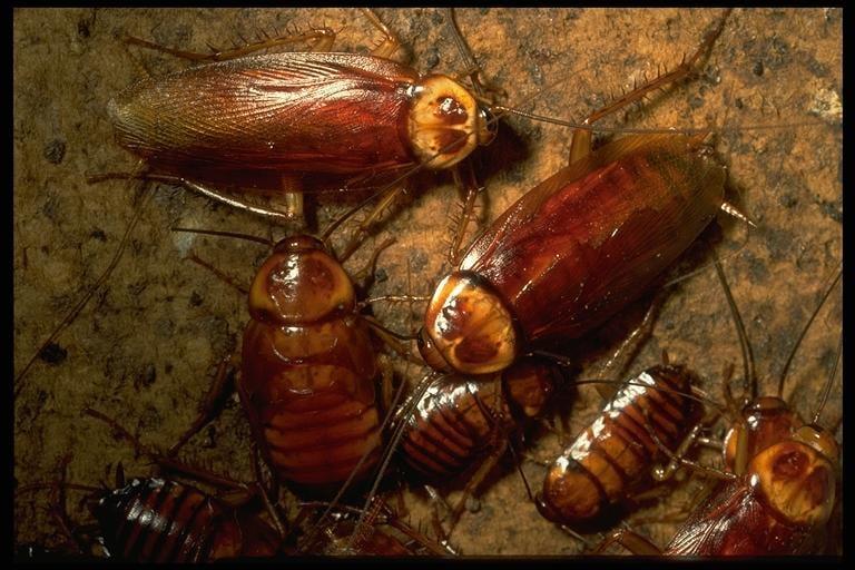 Ranger Termite & Pest Control