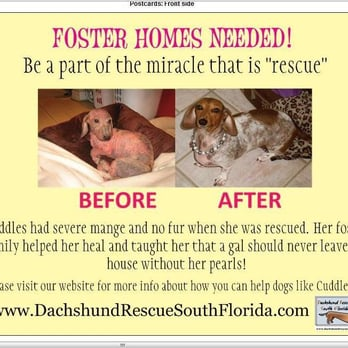 Dachshund Rescue of South Florida - 2019 All You Need to