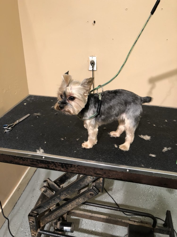 Pawsitively Divine Grooming: 251 E Main St, Mount Kisco, NY