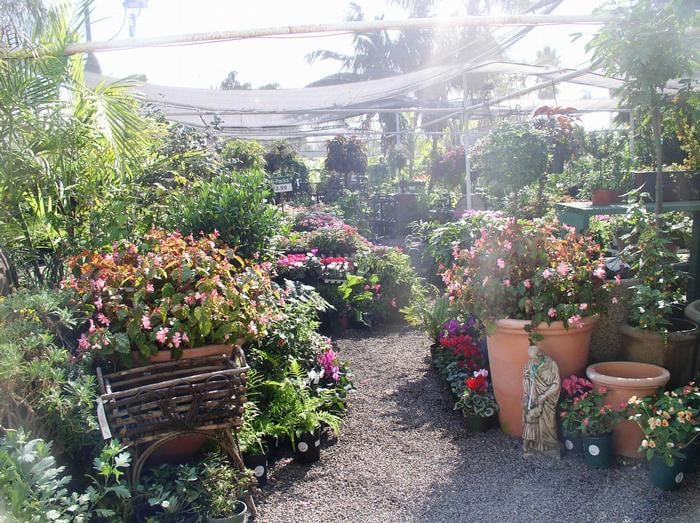 82 Photos For Andersons La Costa Nursery