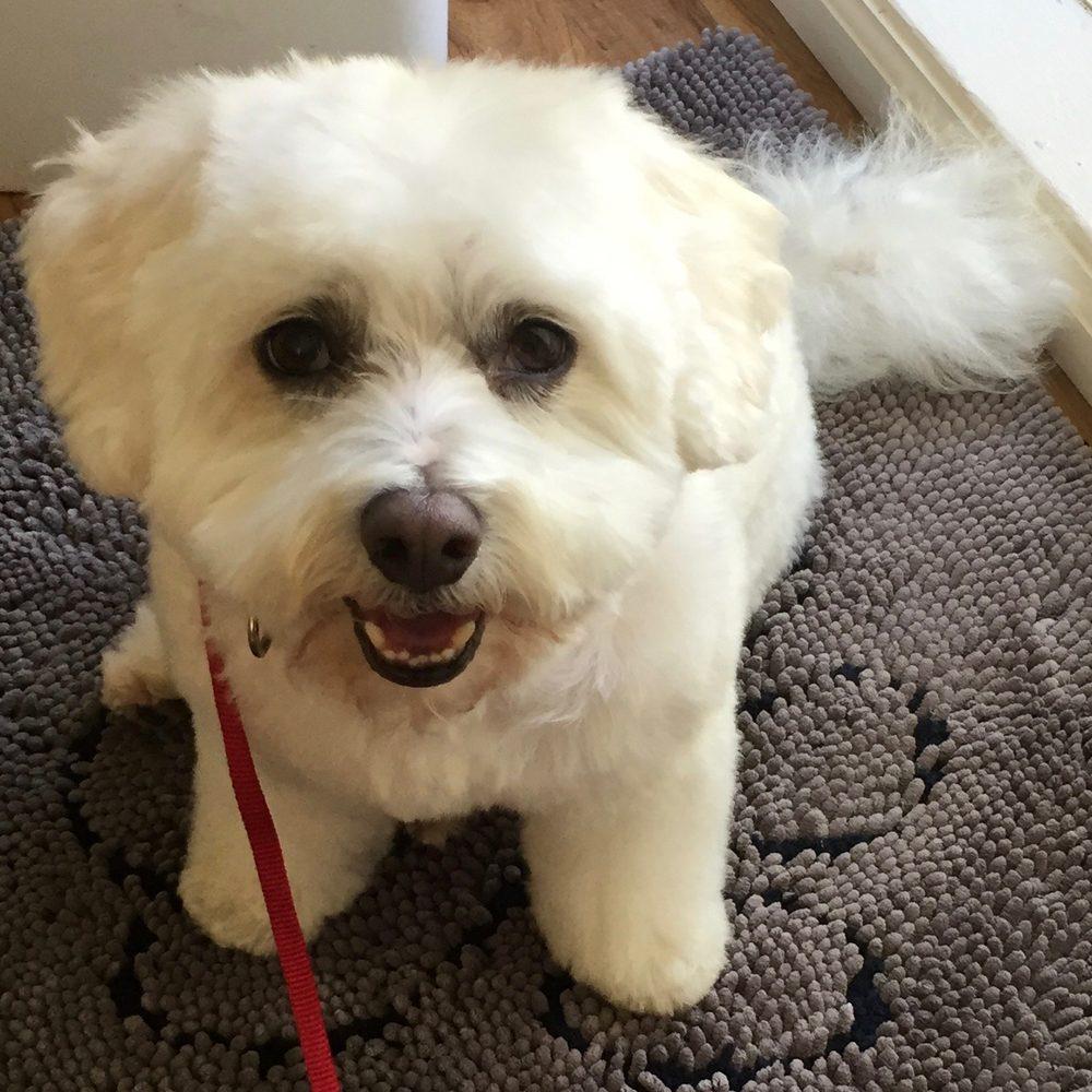 Yelp Palo Alto Dog Grooming