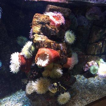 Aquarium Of The Pacific 5603 Photos 1627 Reviews
