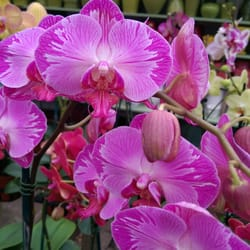 Photo Of Michaelu0027s Garden Gate Nursery   Mount Kisco, NY, United States