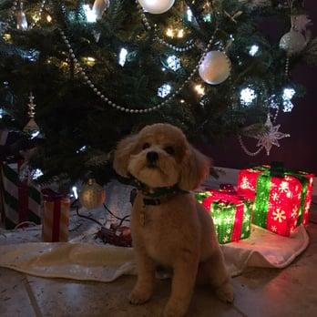 Dog Grooming Hoboken
