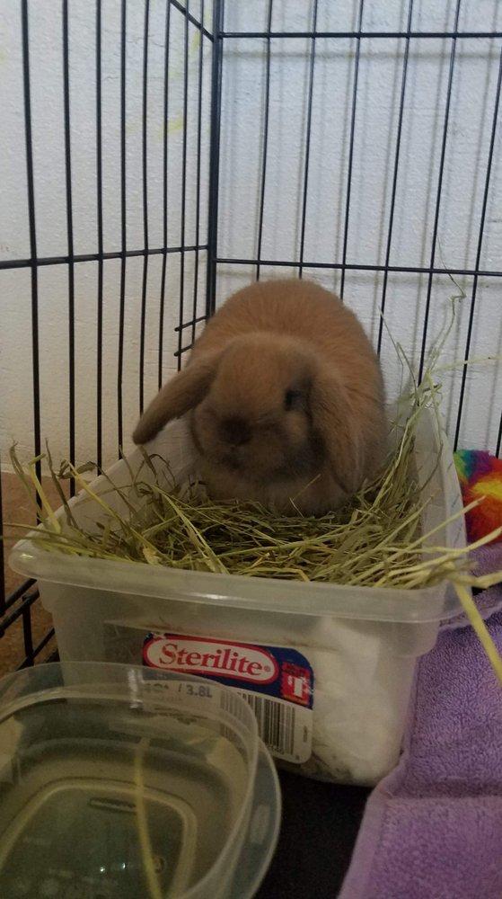 Bunny Whisperer Rabbitry: Malvern, AR
