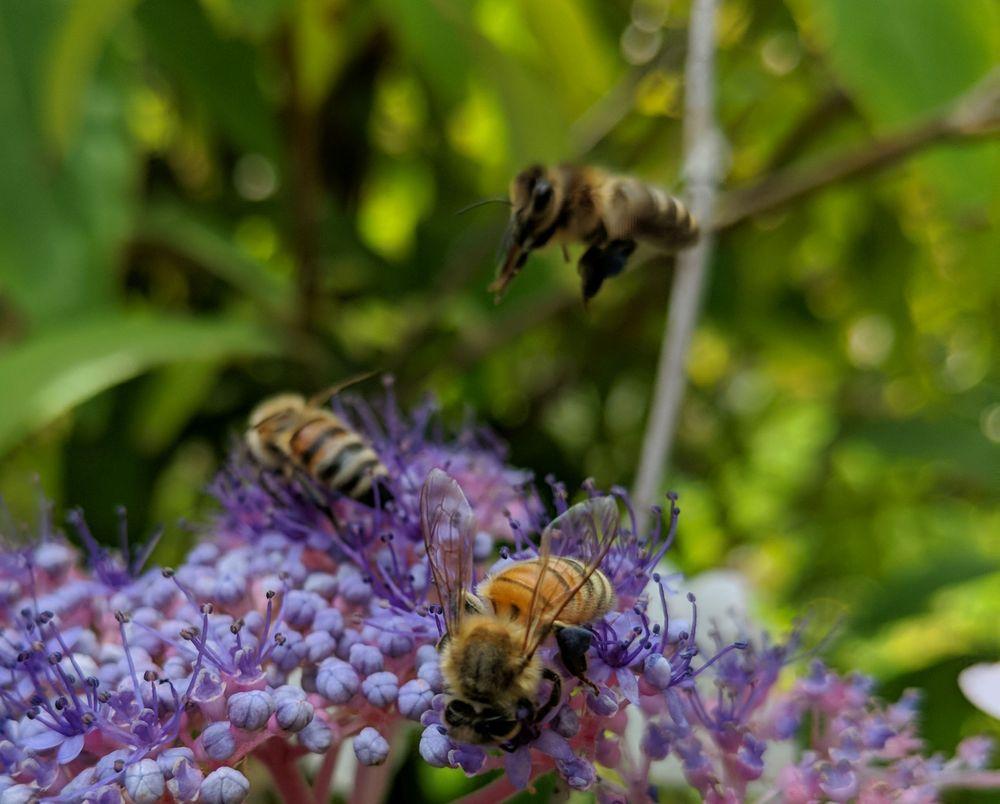 Quarryhill Botanical Garden: 12841 Sonoma Hwy, Glen Ellen, CA