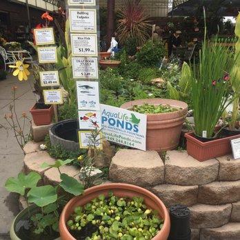 Green Thumb Nursery Lake Forest 207 Photos 160 Reviews Nurseries Gardening 23782 Bridger Rd Ca Phone Number Yelp