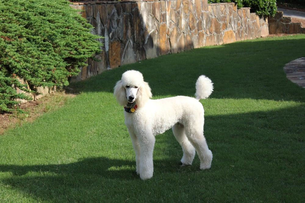 Dog Grooming Alpharetta Ga