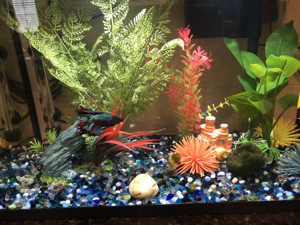 What's In Your Tank: 3940 Lake Padgett Dr, Land O' Lakes, FL