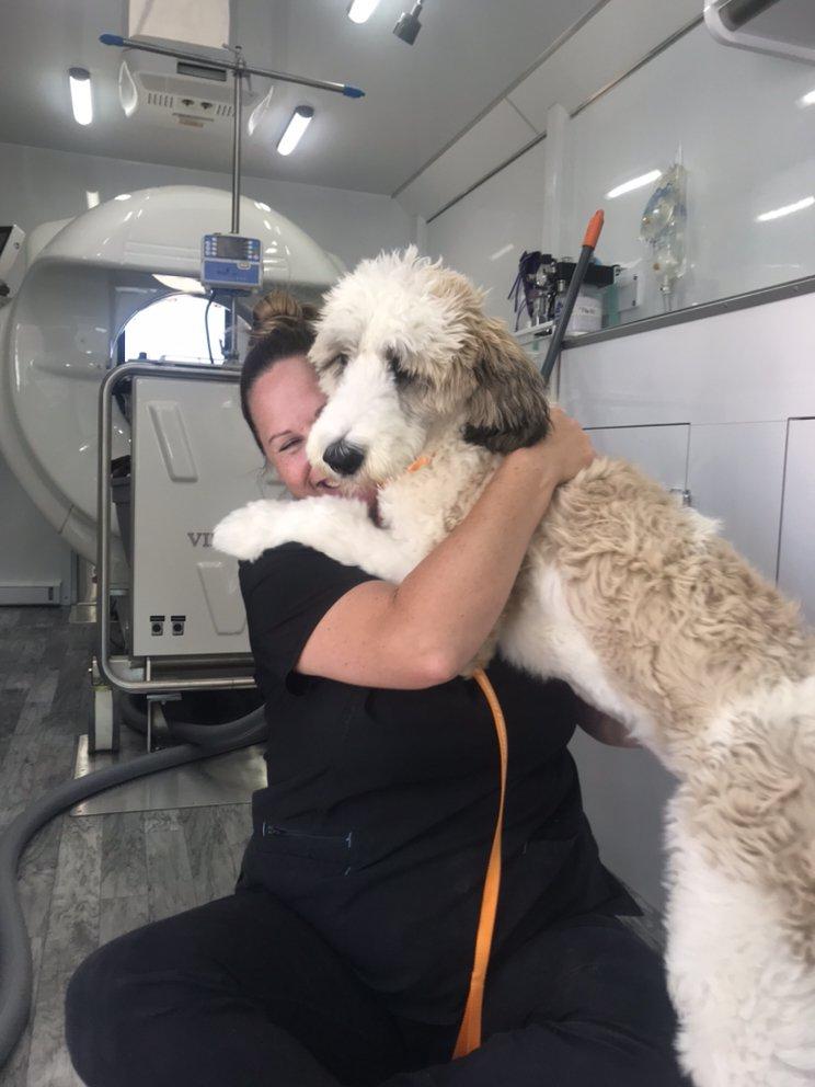 Shiloh Veterinary Hospital