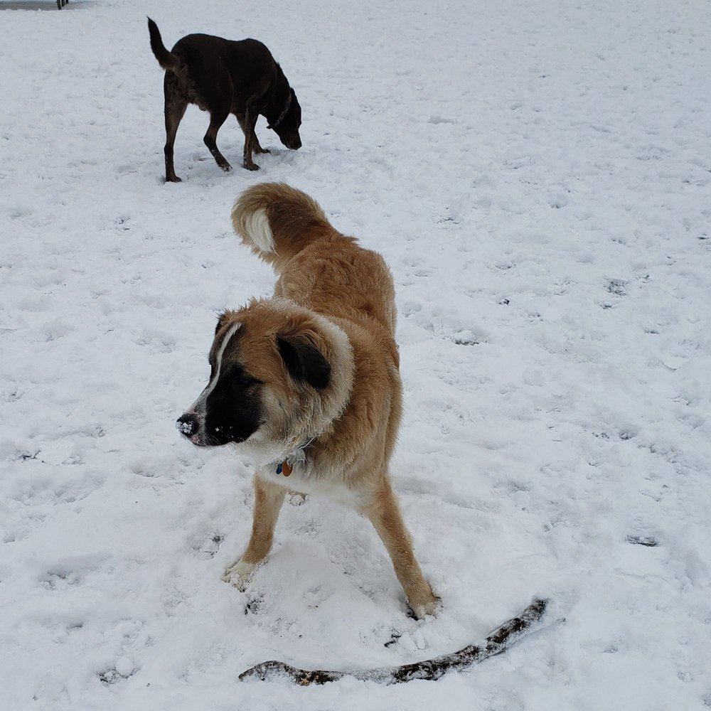 Schweitzer Woods Dog Park: 16N690 Sleepy Hollow Rd, West Dundee, IL