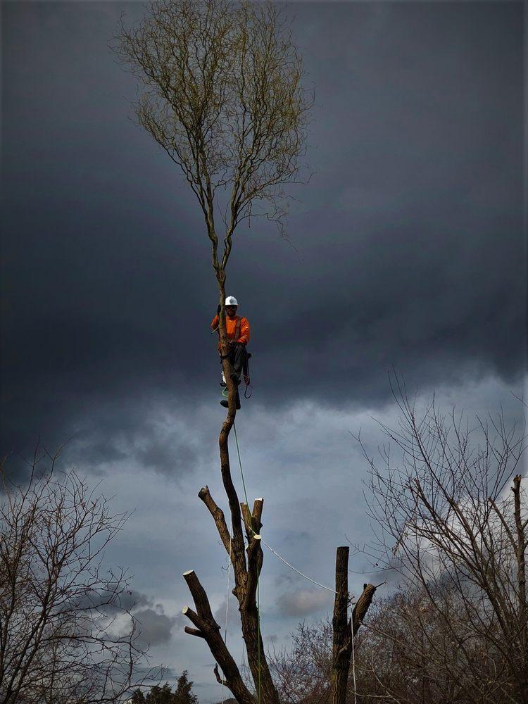 Peterson Tree care: 1534 Bear Hollow Ln, Elk Ridge, UT