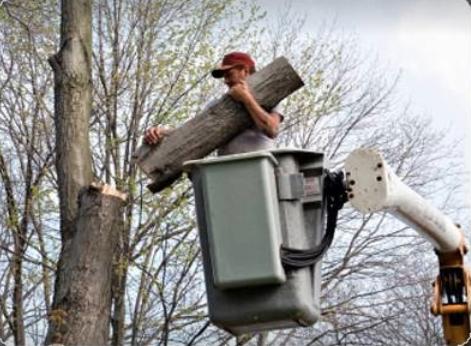 Champion Tree Service
