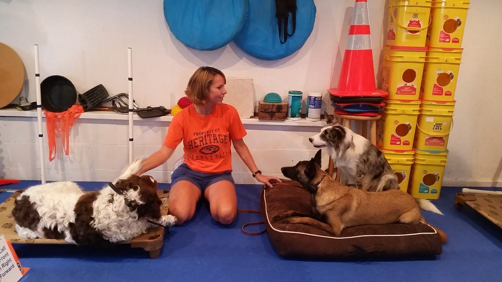 Dogtastic: 515 N Cato Springs Rd, Fayetteville, AR