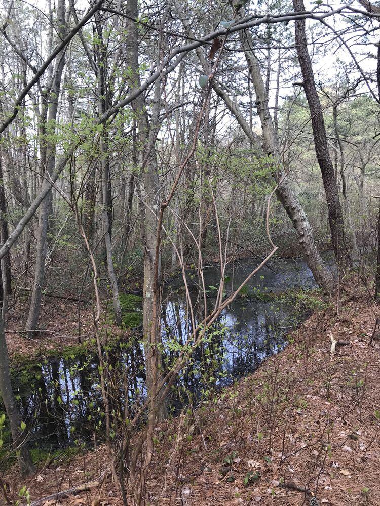 Sans Souci Nature Preserve: Broadway Ave, Bayport, NY