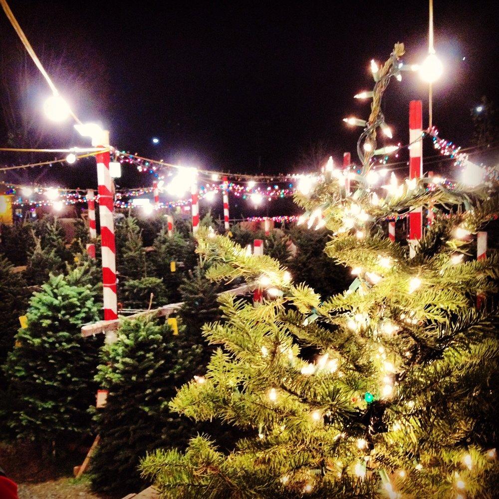 Delancey Street Christmas Trees: 10496 San Pablo Ave, El Cerrito, CA