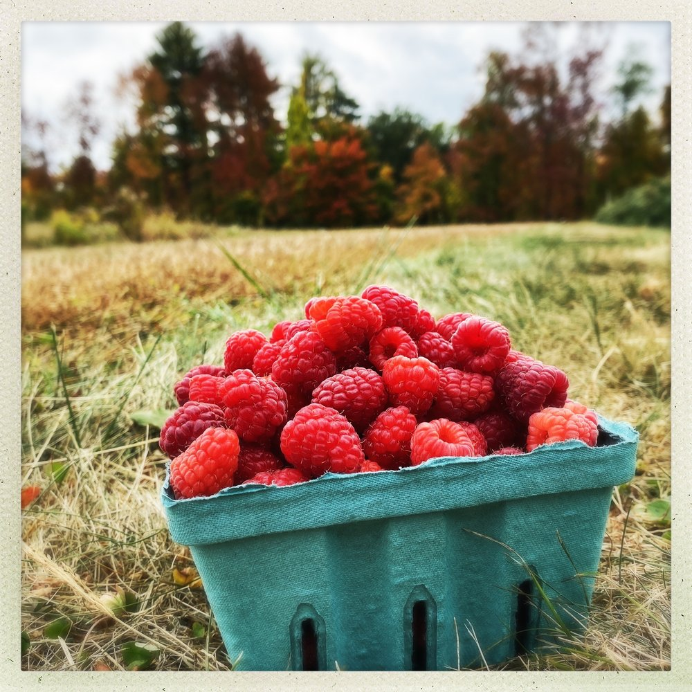 McDougal Orchards