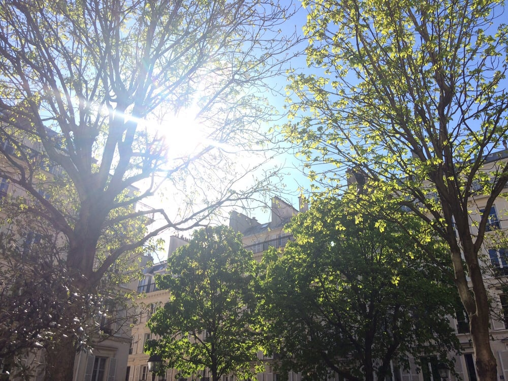 Caf Ef Bf Bd Limo Paris