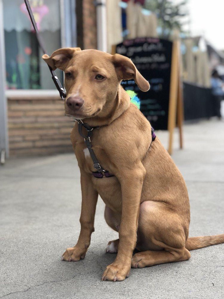 Belmont Pets & Launderpet