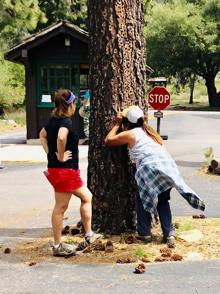 Paso Picacho Picnic and Campgrounds: Cuyamaca Rancho State Park, Descanso, CA
