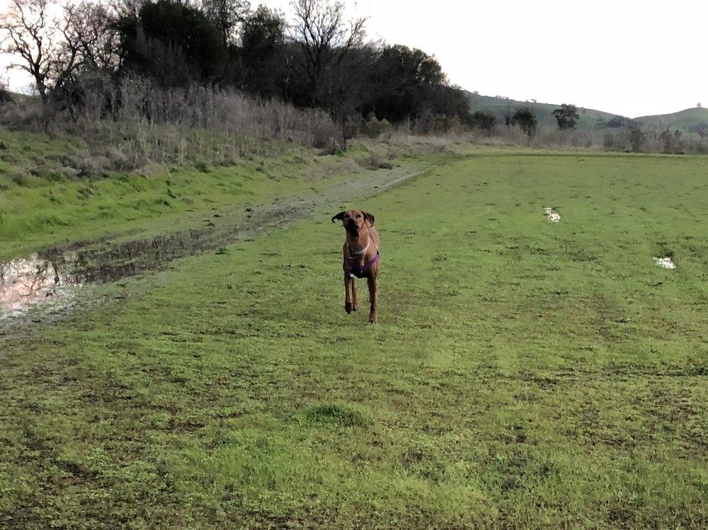 Ruff Translation Dog Training: Winters, CA