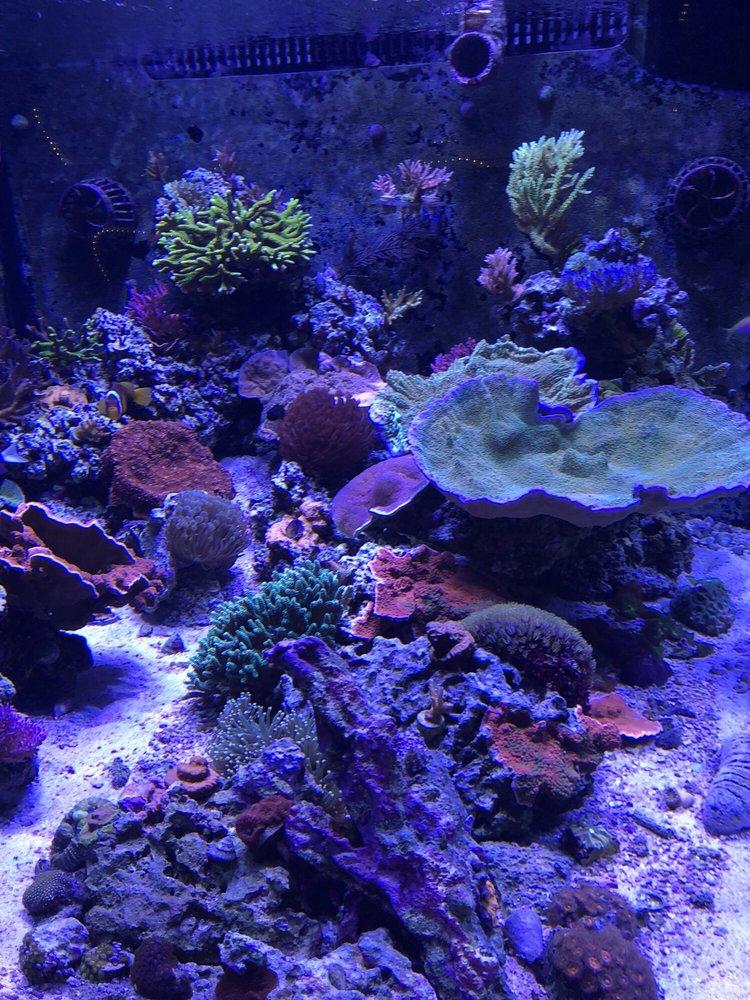 Reef eScape: 11141 Lee Hwy, Fairfax, VA