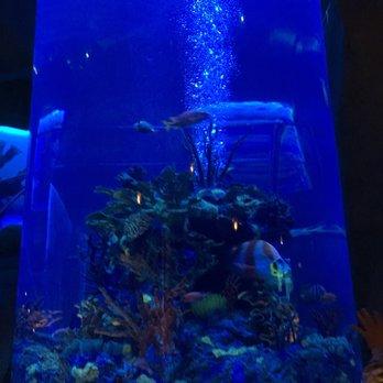 Photo Of Aquarium Restaurant Kemah Tx United States