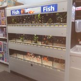 Walmart delano 26 photos 18 reviews pound shops for Does walmart sell fish