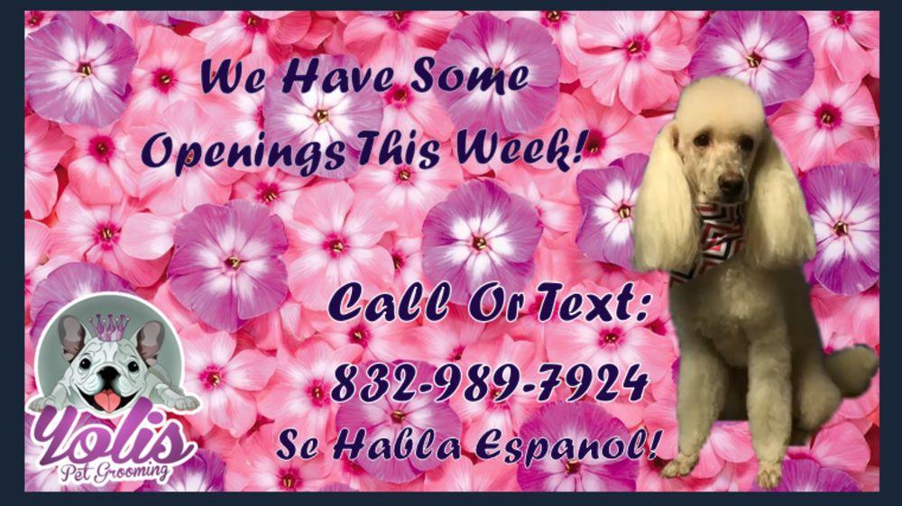 Yoli's Pet Grooming: 803 Hidden Valley Dr, Houston, TX