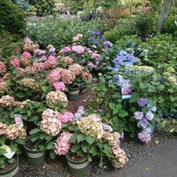 Shorty S Garden Center 20 Photos 34 Reviews Nurseries