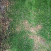 Photo Of Lawn Doctor Denver Co United States