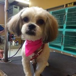 Family companion pet salon 64 fotos est tica de for A family pet salon