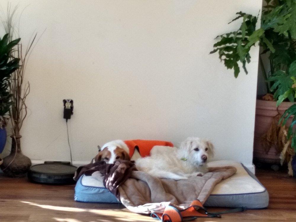 Hike Hounds Canine Adventures