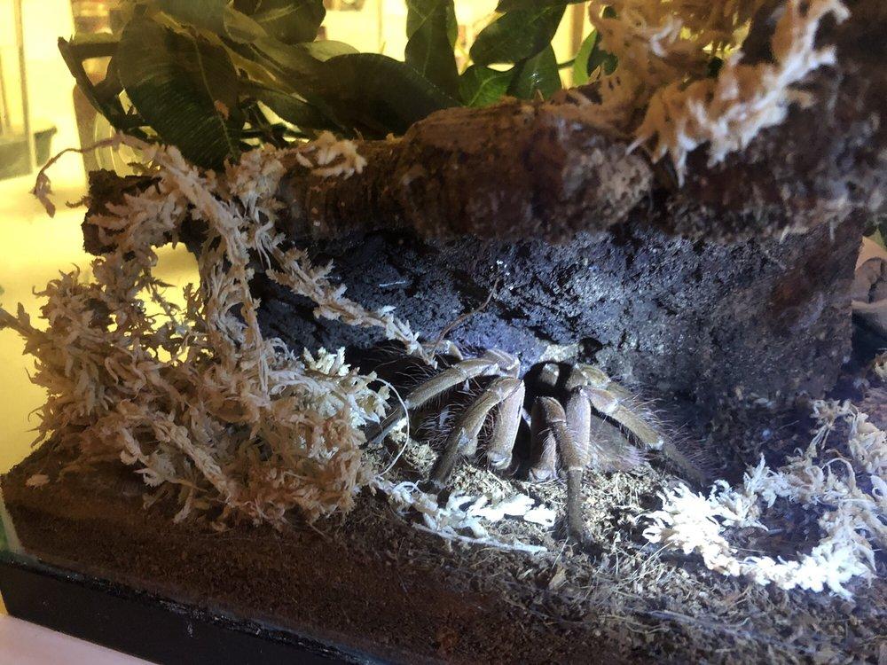 5280 Reptile Room: 4131 Kipling St, Wheat Ridge, CO