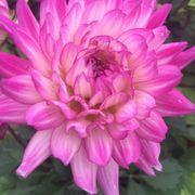 Maria gardens center 12 photos nurseries gardening 10301 w 130th st north royalton oh for Maria s garden center