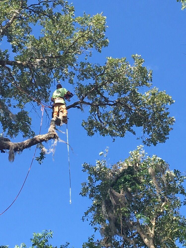 Dathan Batie Tree Service: Gainesville, FL