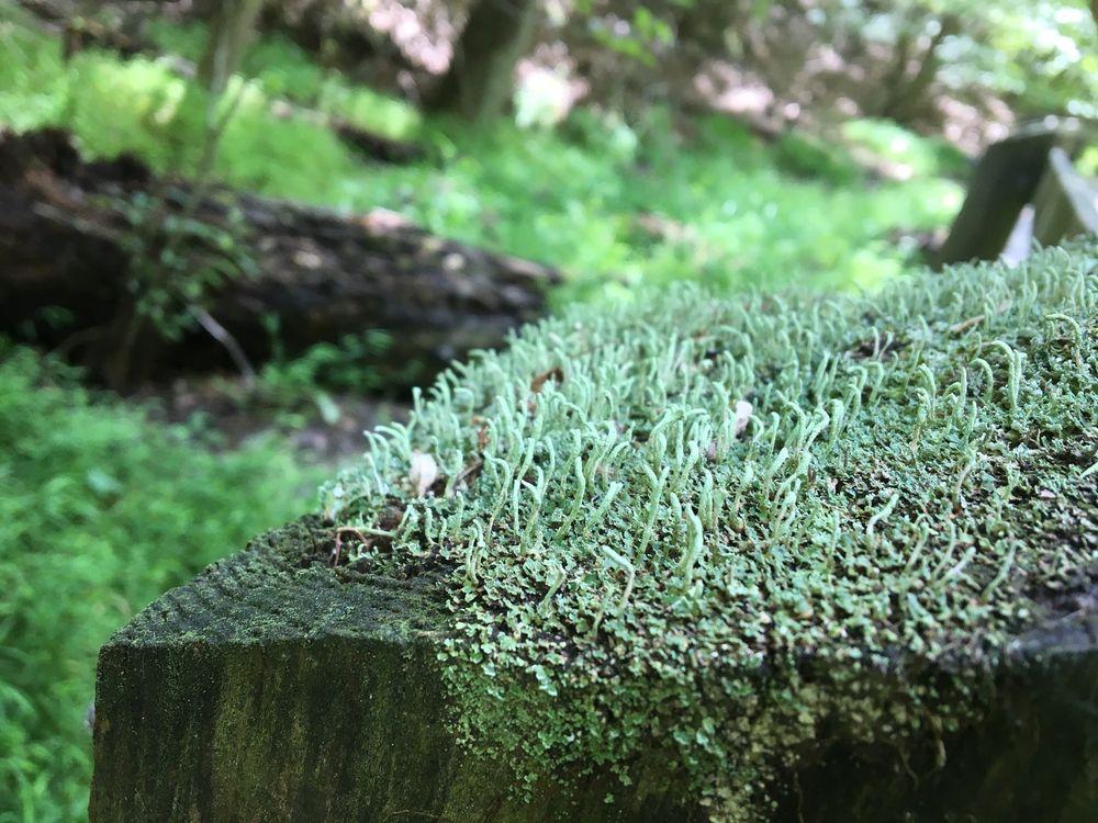 Magruder Branch Trails: Valley Park Dr, Damascus, MD