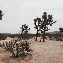 Holotropic Breathwork LA - 19 Photos - Naturopathic/Holistic