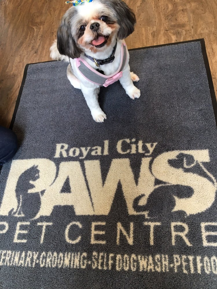 Royal city paws pet centre 10 reviews pet groomers 660 royal city paws pet centre 10 reviews pet groomers 660 columbia street new westminster bc phone number yelp solutioingenieria Images