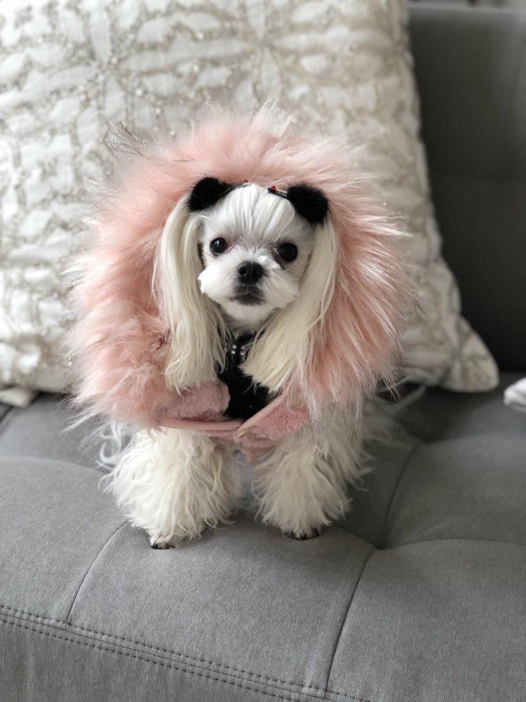 My Fluppy Pet Grooming Spa: 3425 N Chatham Rd, Ellicott City, MD