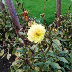 photo de jardin des plantes lille - Jardin Des Plantes Lille