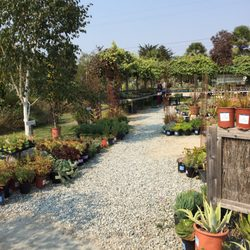 Photo Of Sierra Azul Nursery Garden Watsonville Ca United States I