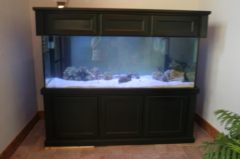 our 300 gallon fish tank with an eel and a shark our 250