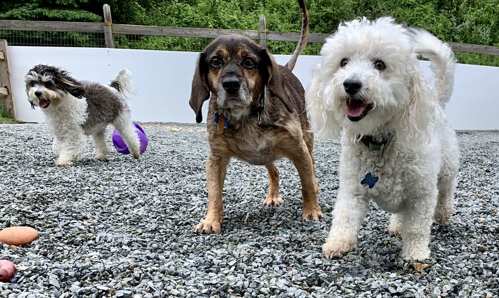Pet Prairie Dog Retreat: 171 Isaacs Branch Rd, Sugar Grove, NC