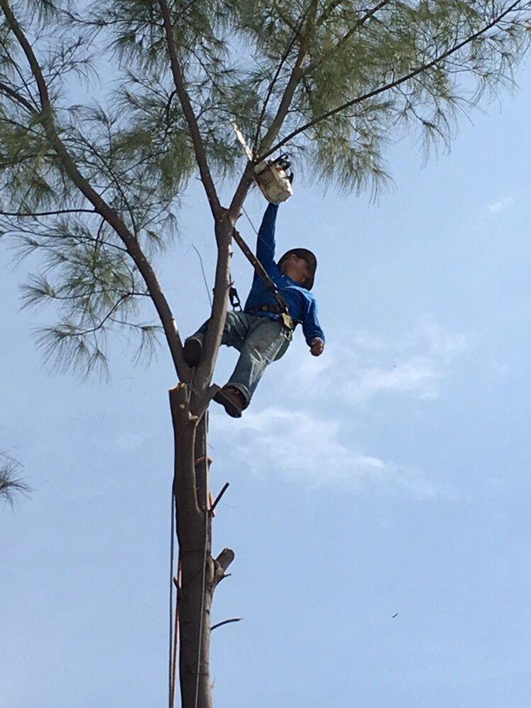 17 Photos For Affordable Tree Service Inc Miami Dade Broward