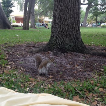 photo of colee hammock park   fort lauderdale fl united states  my squirrel colee hammock park   84 photos  u0026 25 reviews   parks   1500      rh   yelp