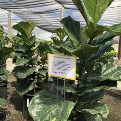 Photo Of Evergreen Nursery San Go Ca United States