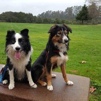 Dog Training Capitola