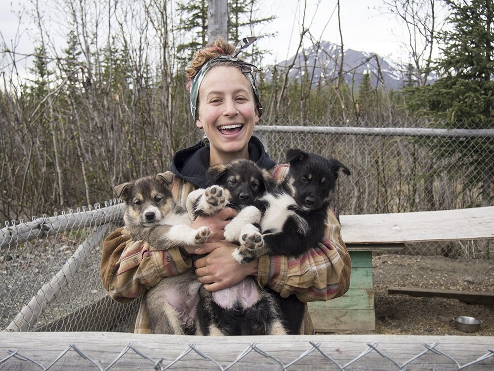 Wildthingz Dog Mushing Summer Tours: Jack River Canyon Rd, Cantwell, AK